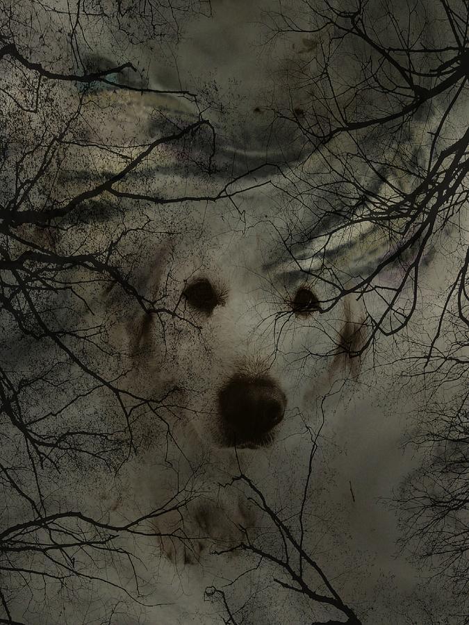 Dog Photograph - Phantom Dog by Shirley Sirois