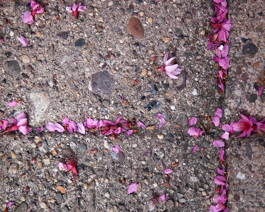 Cherry Blossoms Photograph - Philadelphia Street Art by Rona Black