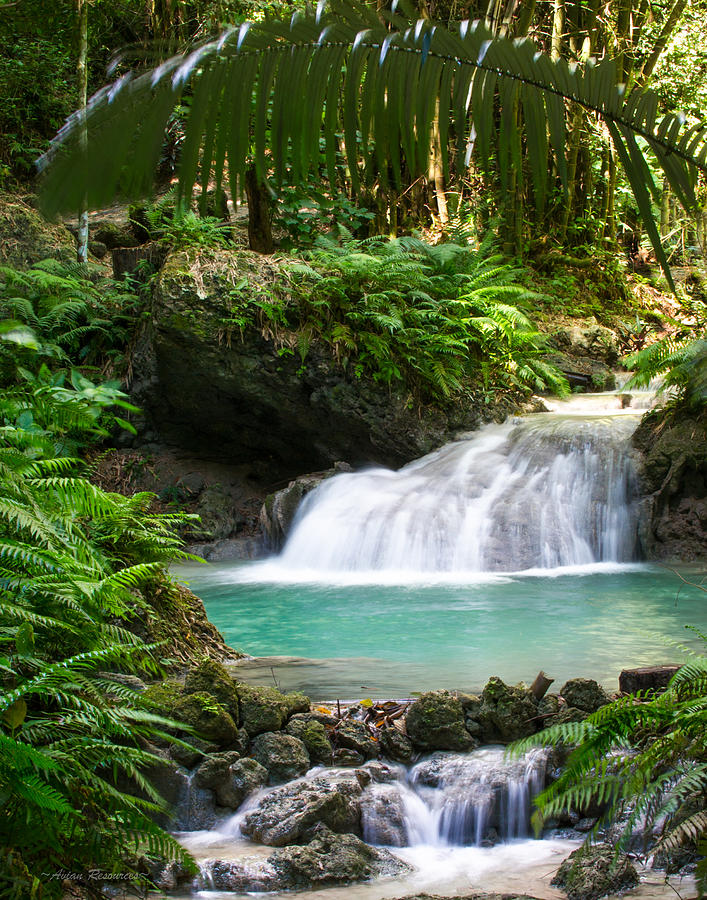 Philippine Waterfall by Avian Resources