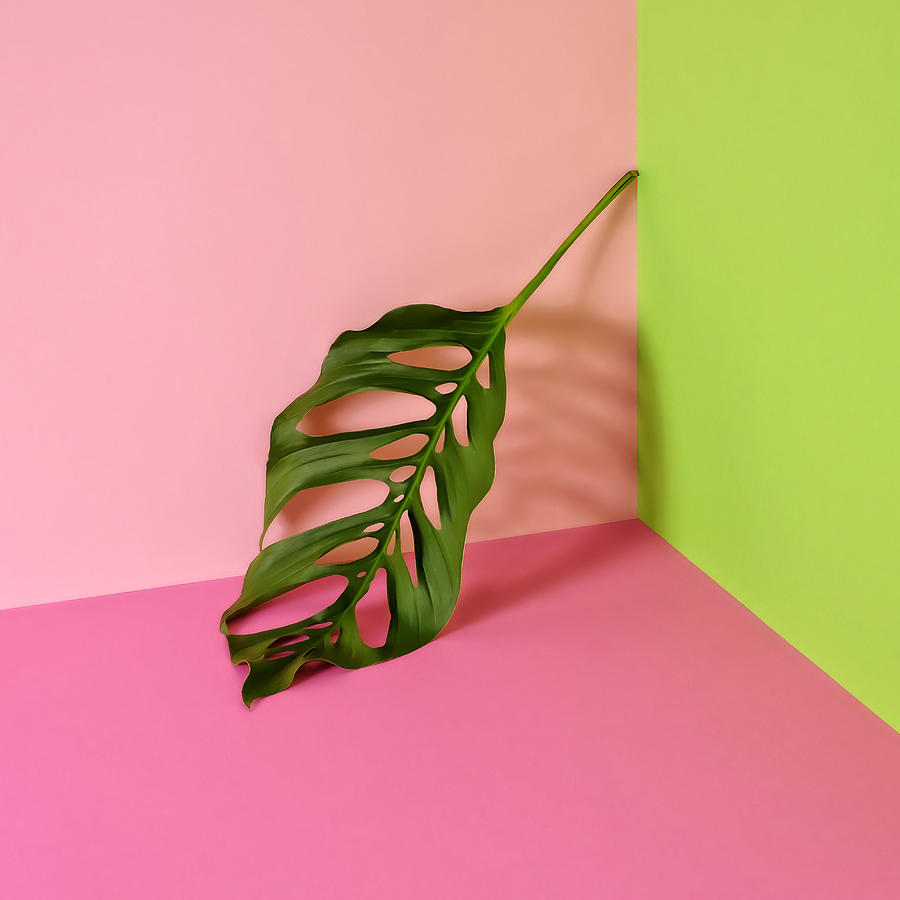 Philodendron Leaf Leaning In Corner Of Photograph by Juj Winn