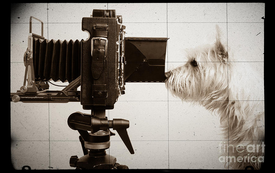 Vintage Photograph - Pho Dog Grapher - Ground Glass View by Edward Fielding