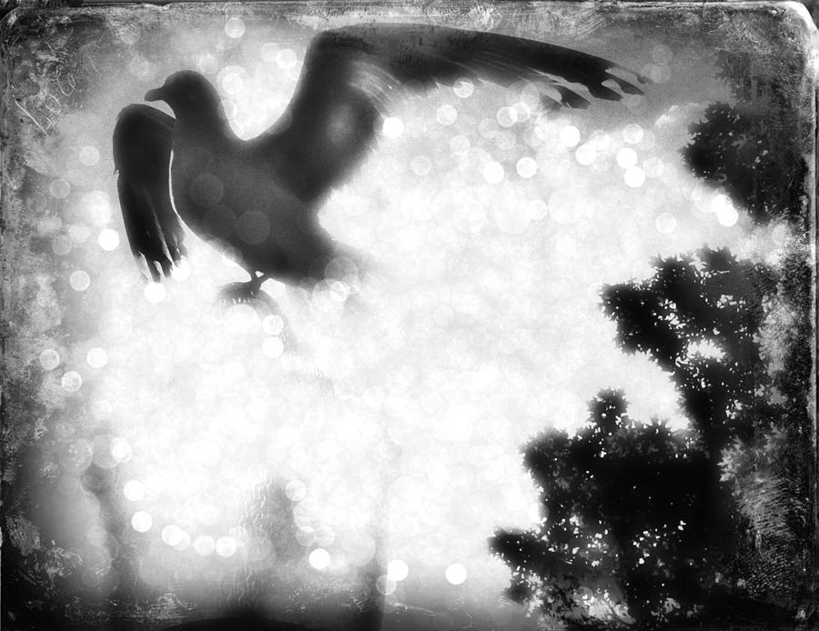 Phoenix Photograph - Phoenix IIi by Aurelio Zucco