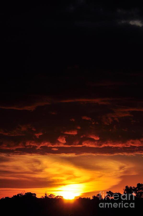 Sun Photograph - Phoenix Sunlit Oracle Card by Coralie Plozza