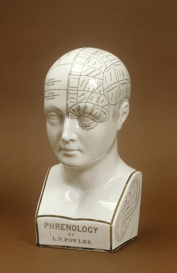1800s Photograph - Phrenology Head by Science Photo Library