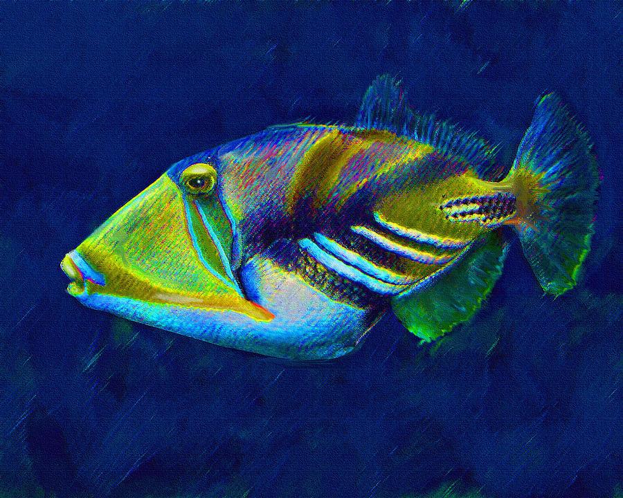 Picasso Triggerfish Digital Art By Jane Schnetlage