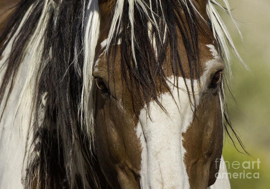 Mustangs Photograph - Picassos Eyes by Carol Walker