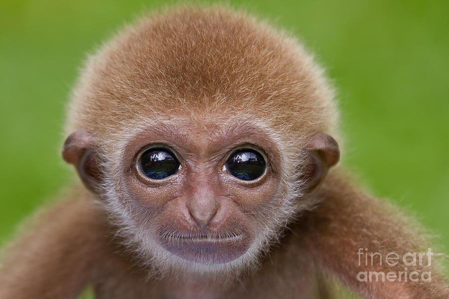 Adorable Photograph - Pick A Card Any Card by Ashley Vincent