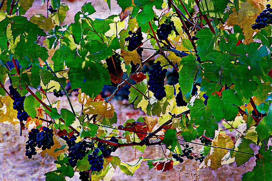 Wine Grapes Digital Art - Pick Me Stomp Me I by Ken Evans