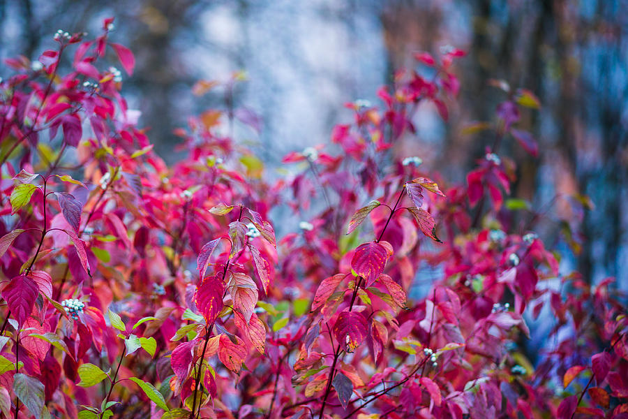 Abstract Photograph - Picturesque Autumn - Featured 3 by Alexander Senin