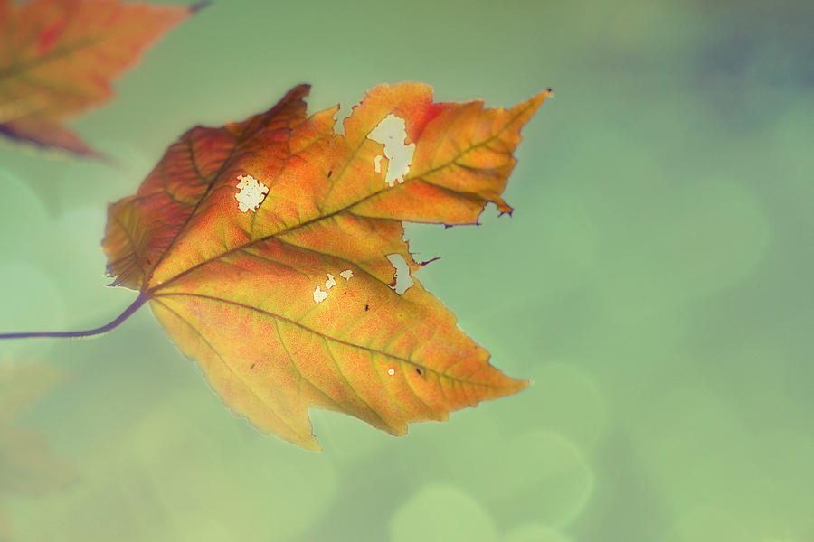 Autumn Leaves Photograph - Pieces Of Me by Amy Tyler