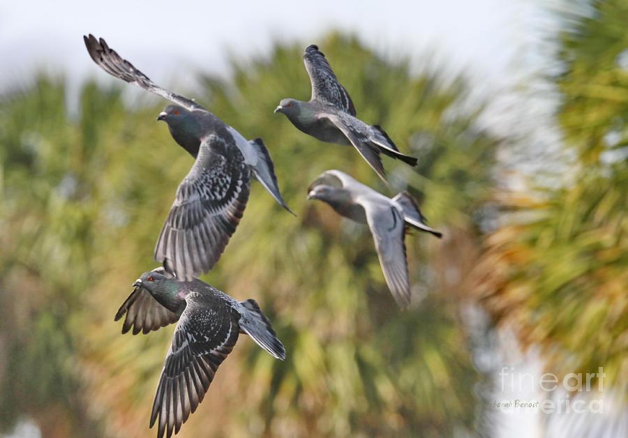 Pigeon Photograph - Pigeon Brigade by Deborah Benoit