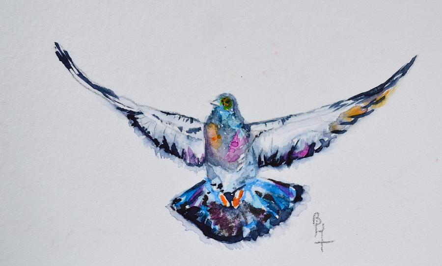 Pigeon In Flight Painting By Beverley Harper Tinsley