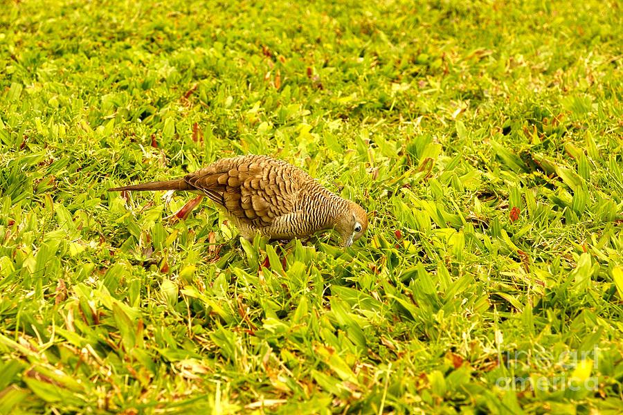 Pigeon Digital Art - Pigeon by Nur Roy