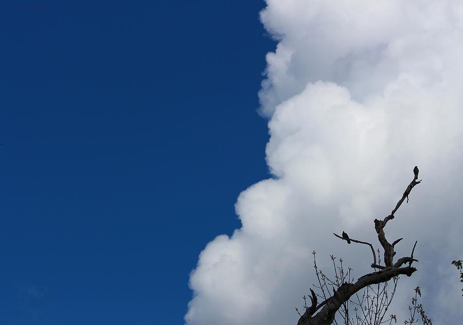 Landscape Photograph - Pigeons Follow Clouds by Kym Backland