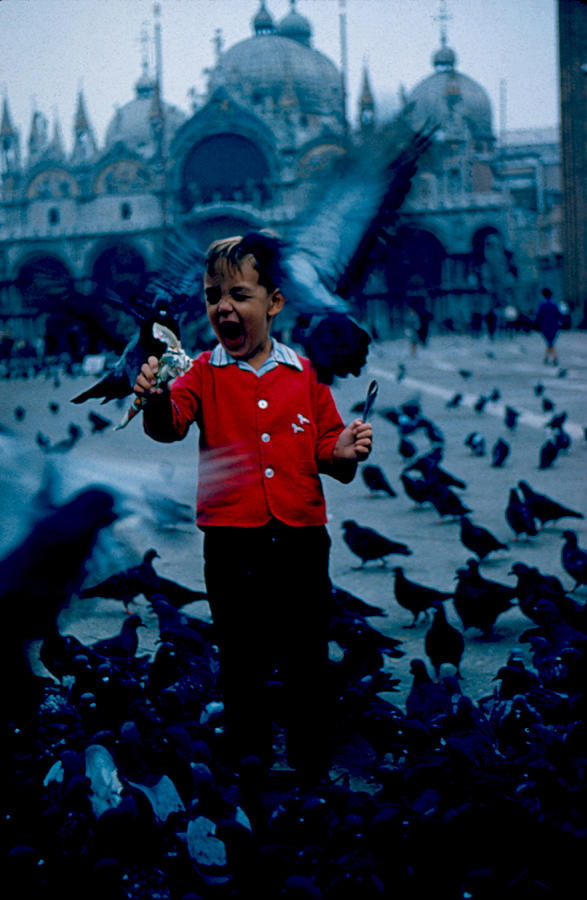 Pigeons Photograph - Pigeons Galore 1961 by Cumberland Warden