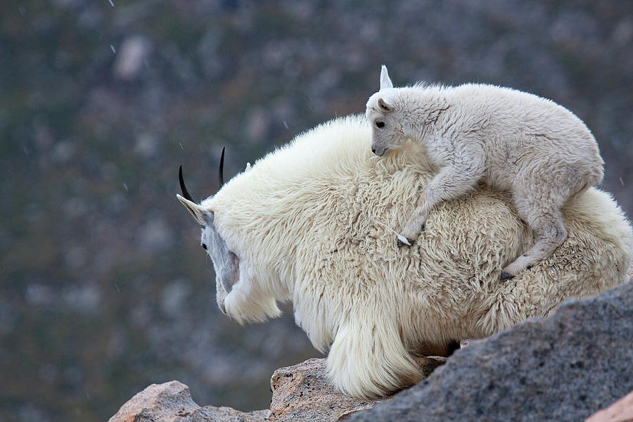 Sisters Photograph - Piggyback Ride by Jim Garrison