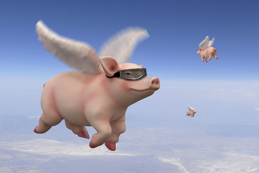 Flying Pigs Photograph - Pigs Fly 1 by Mike McGlothlen