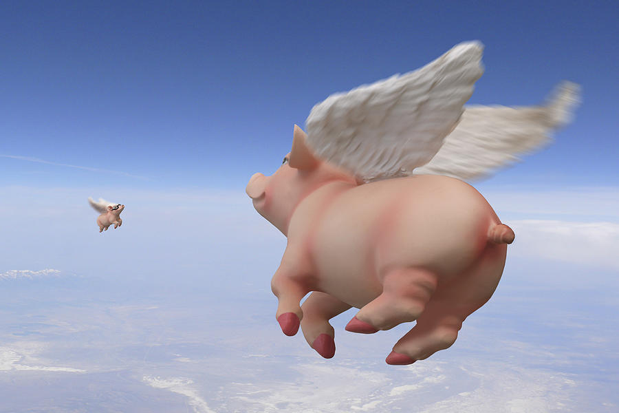 Pigs Fly Photograph - Pigs Fly 2 by Mike McGlothlen