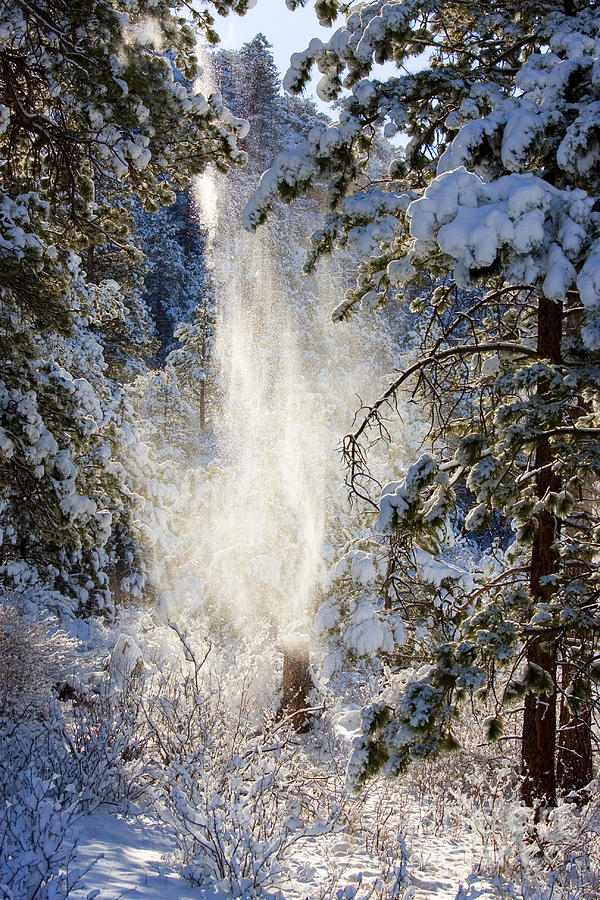 Pike National Forest Snow Photograph