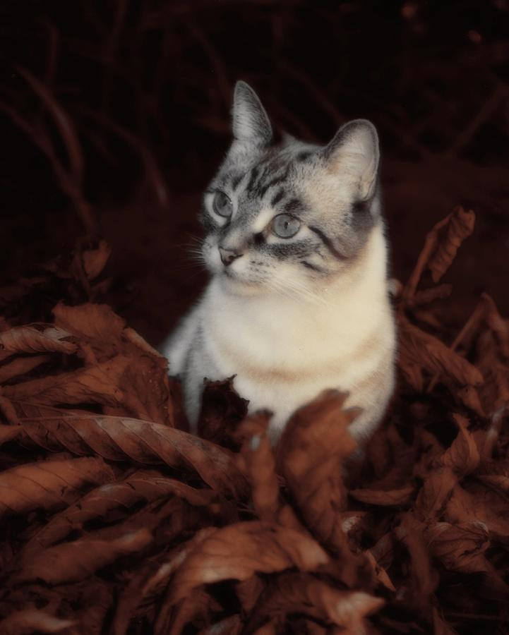 Autumn Photograph - Rustic Pile Of Leaves And Cat by Gothicrow Images