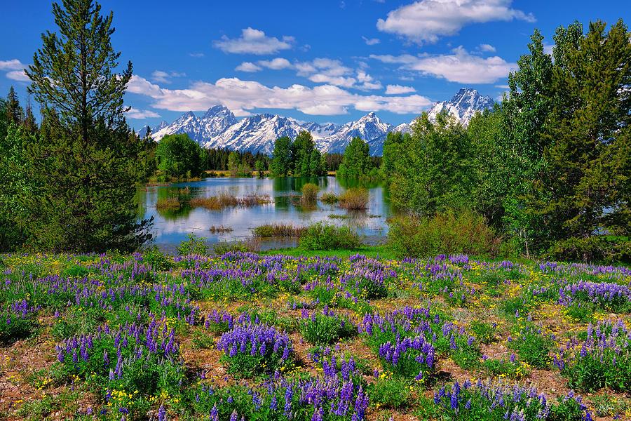 Wildflowers Photograph - Pilgrim Creek Wildflowers by Greg Norrell