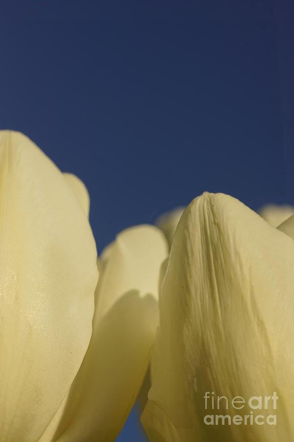 Flowers Photograph - Pillow Soft by Jeffery L Bowers