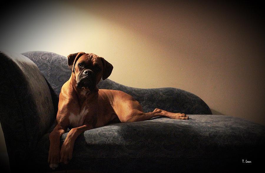 Dog Photograph - Pin-up by Thomas Leon