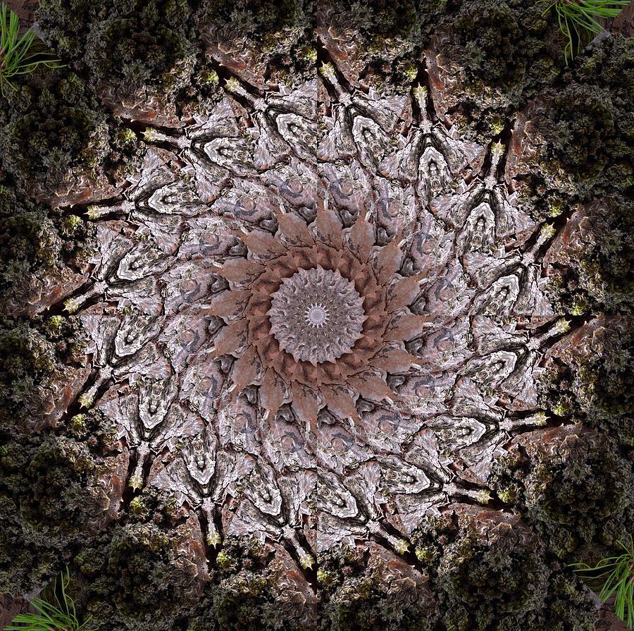 Pine Tree Photograph - Pine Bark Mandala #1 by Beth Sawickie
