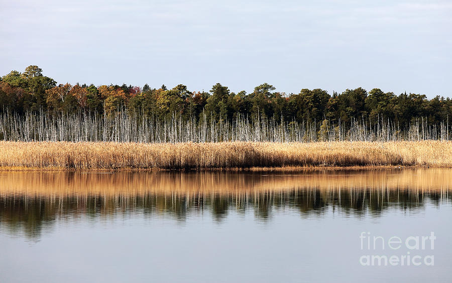 Pine Barrens Reflections Photograph - Pine Barrens Reflections by John Rizzuto