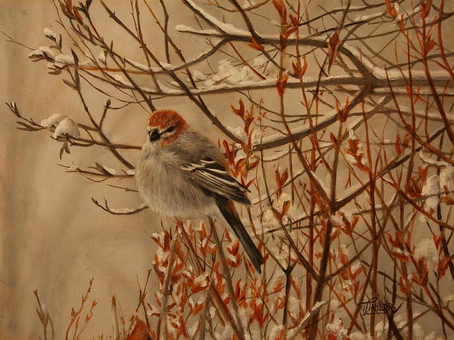 Bird Painting - Pine Grosbeak by Tammy  Taylor