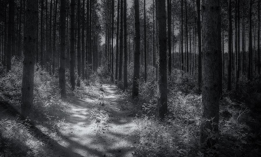 Pine Grove Photograph