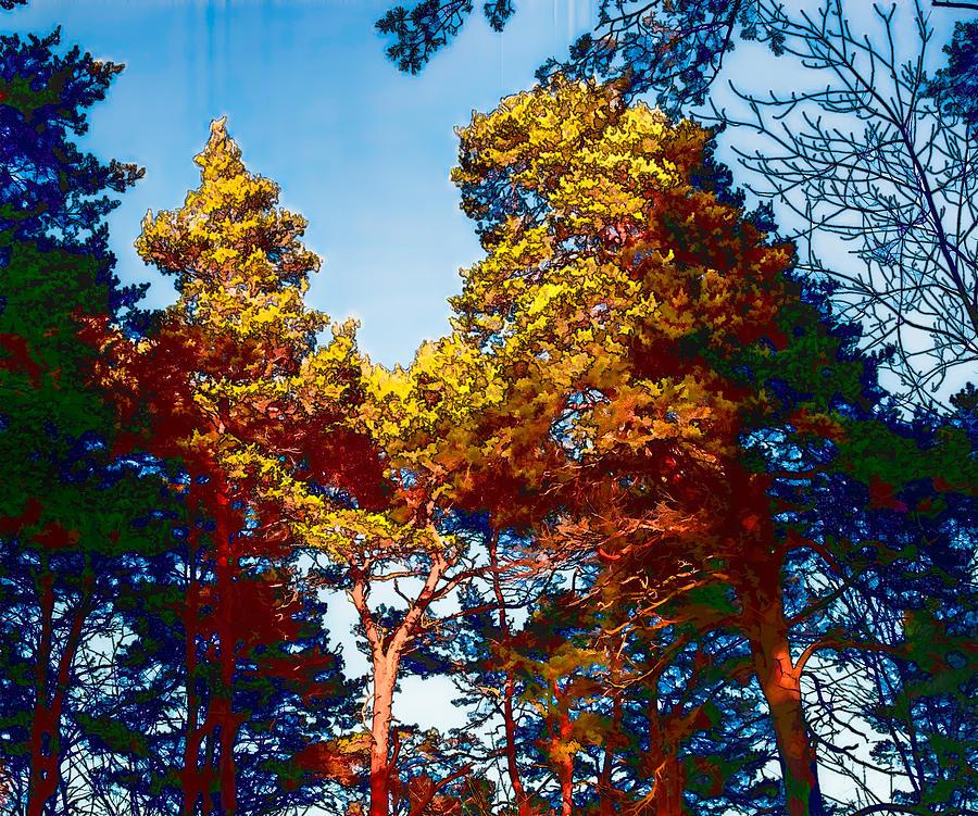 Tree Photograph - pine  Leif Sohlman by Leif Sohlman