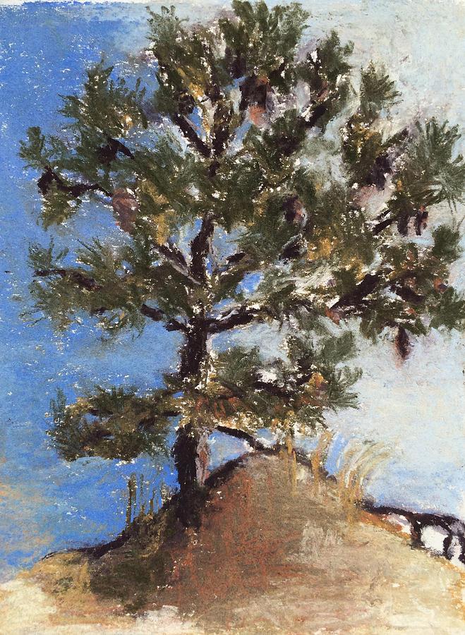 Pine Tree Drawing - Pine Tree by Cristel Mol-Dellepoort