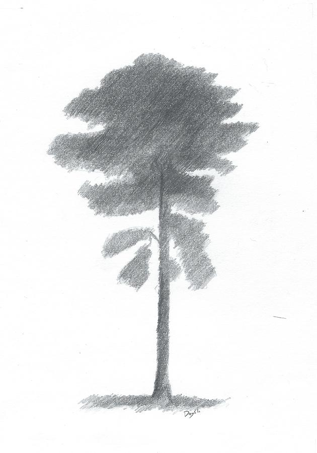 Drawings Of Trees Painting - Pine Tree Drawing Number Four by Alan Daysh