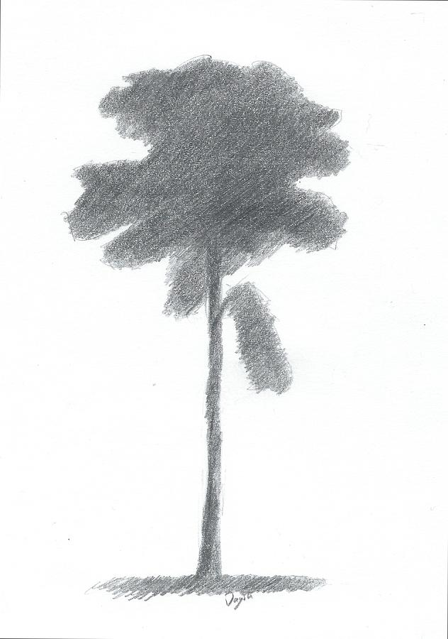 Pine Tree Drawing Painting - Pine Tree Drawing Number Three by Alan Daysh