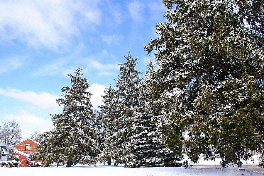 Pine Tree Photograph - Pine Tree Haven by Frozen in Time Fine Art Photography