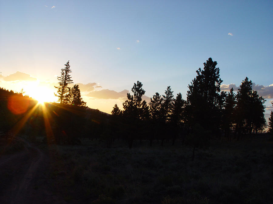 Pine Tree Photograph - Pine Tree Sunset by Mark Russell