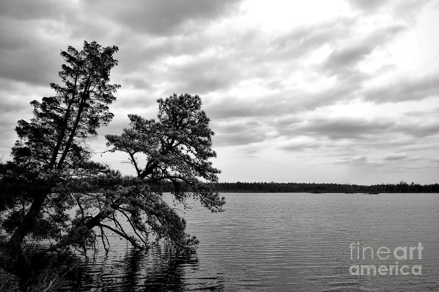 New Photograph - Pinelands Memories by Olivier Le Queinec