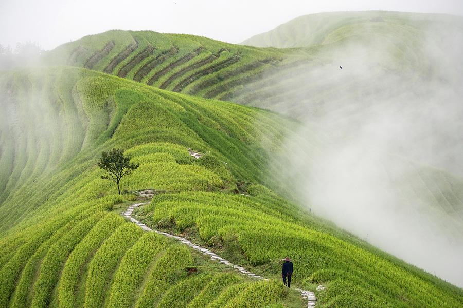 China Photograph - Pingan Rice Terraces by Miha Pavlin