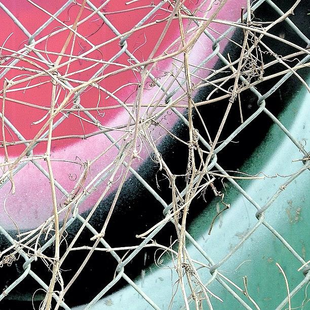 Pink and Blue Abstract Photograph by Julie Gebhardt