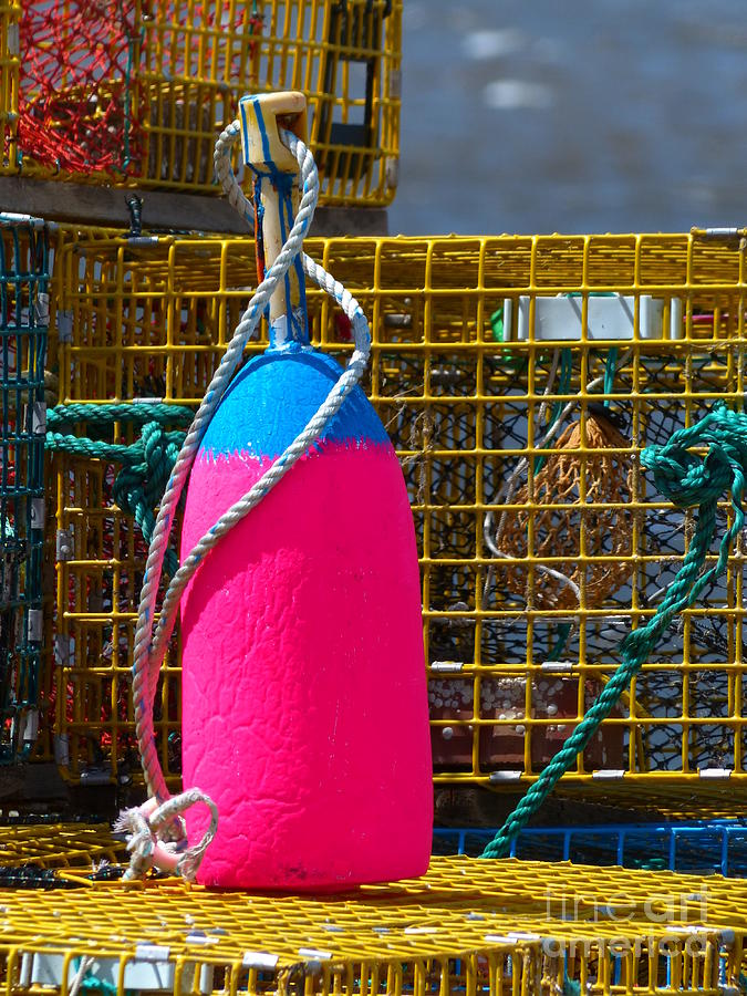 Pink and Blue Lobster Buoy on Traps by Christine Stack