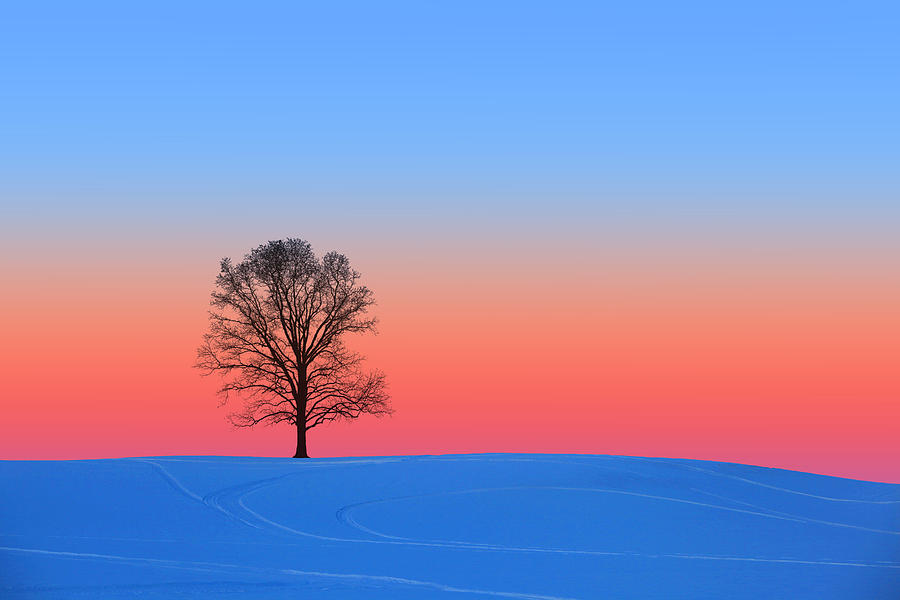 Pink and Blue Silhouette by Larry Landolfi