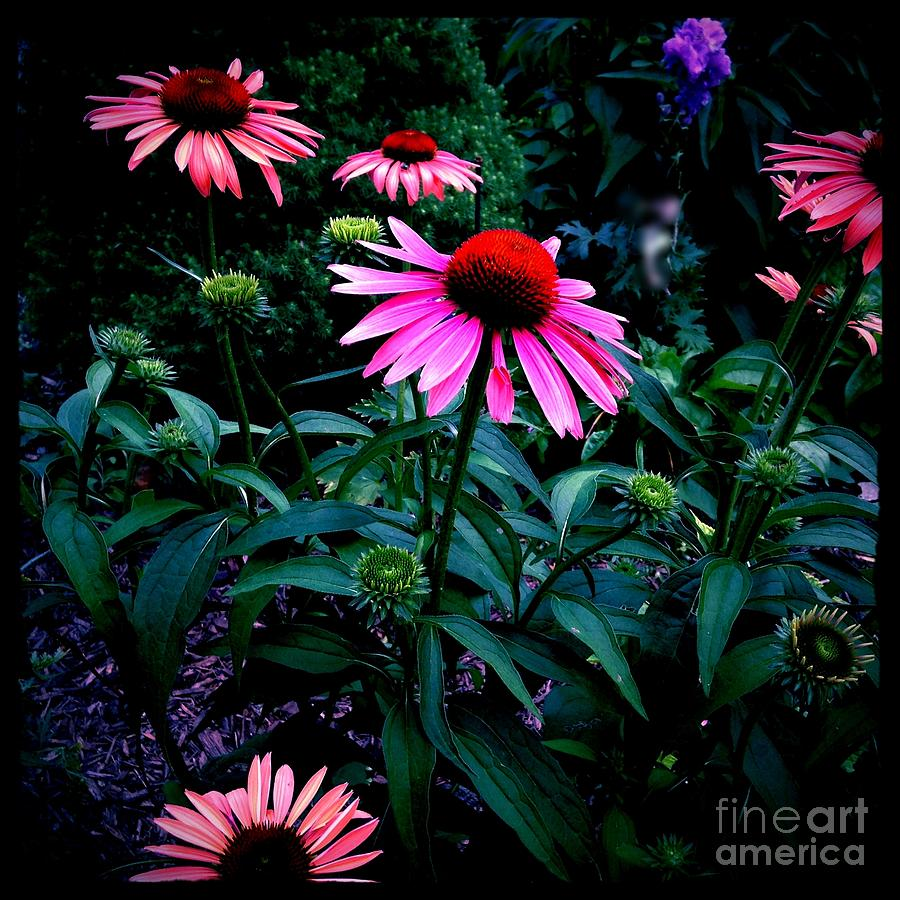 Pink And Orange Catchy Colors Photograph