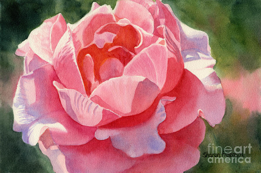 Pink Painting - Pink And Orange Rose Blossom by Sharon Freeman