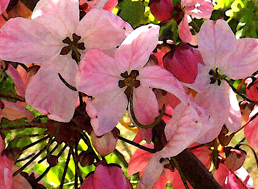 Iphone Cases Photograph - Pink And White Shower Tree by James Temple