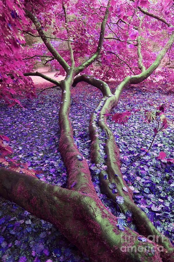 Autumn Photograph - Pink Autumn by Sally Barnett