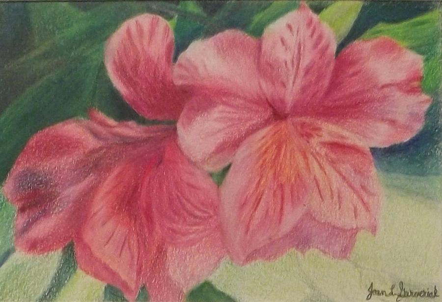 Pink Flowers Drawing - Pink Azalea by Joan Garverick
