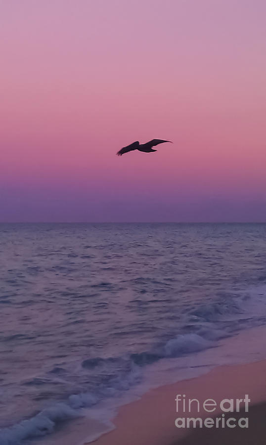 Pink Beach Sunset Photograph