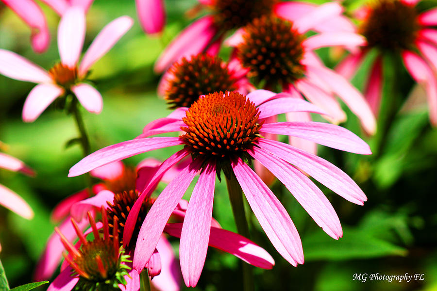 Pink Photograph - Pink Beauty by Marty Gayler