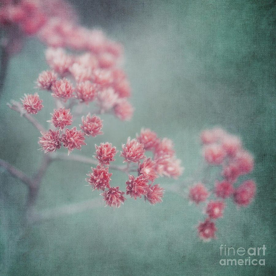 Flower Photograph - Pink Beauty by Priska Wettstein